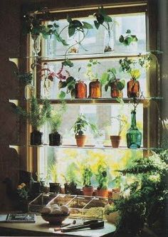40 Window Design Ideas With Plant That Make Your Home Cozy More . Nothing makes a house decor more beautiful than indoor plants. It adds not only freshness and fragrance to your home but also adds a new life to your . Window Shelves, Plant Shelves, Window Plants, Hanging Plants, Plant Design, Garden Design, House Design, Indoor Outdoor, Glass Shelves Kitchen