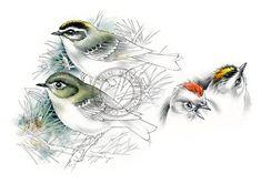 Roitelets Ruby & couronne dorée art de l'oiseau art