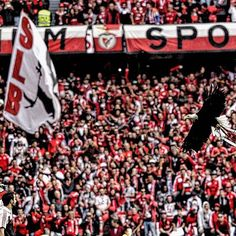 Perdemos uma batalha, mas domingo espero o Estádio da Luz lotada e apoiando o tempo todo, como todos Benfiquistas tem estado sempre!!! #juntos #juntossomosmaisfortes #benfica