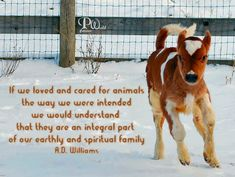 If we loved and cared for animals, the way we were intended we would understand  that they are an integral part of our earthly and spiritual family. ~ A.D. Williams ~