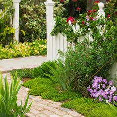 Groundcover plants d