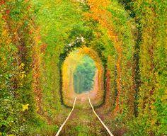 Le strade più belle - Tunnel Of Love, Romania, Caras-severin Beautiful Streets, World's Most Beautiful, Beautiful World, Beautiful Flowers, It's Wonderful, Beautiful Scenery, Beautiful Cats, Beautiful Beaches, Le Tunnel