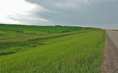Canada.Alberta.(5)  08543 Cattle, Landscapes, Country Roads, Canada, Scenery, Gado Gado, Paisajes, Cow