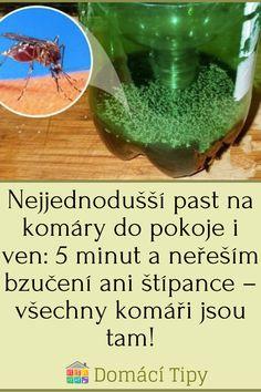 Nejjednodušší past na komáry do pokoje i ven: 5 minut a neřeším bzučení ani štípance – všechny komáři jsou tam! Guacamole, Venus, Ethnic Recipes, Ideas, Household, Thoughts, Venus Symbol