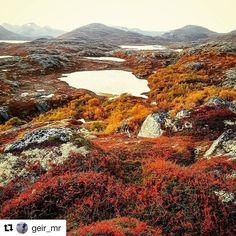 Høstens farger. #reiseliv #reiseblogger #reisetips #reiseråd  #Repost @geir_mr (@get_repost)  Dovrefjell og Sunndalfjella Nasjonalpark i høstfarger