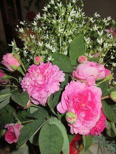 Raccontare un paese: dal mio orto: rose e fiori spontanei