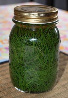 Pine needle vinegar. going to try this with young spruce tips. The tips smell almost like lime, so I'm hoping to use the vinegar as a substitute.