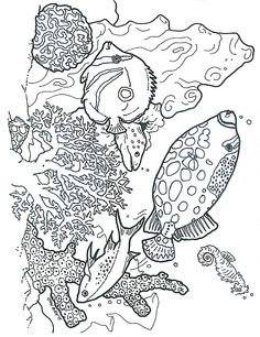Resultado de imagem para dover coloring pages aloha hibiscus Camping Coloring Pages, Dover Coloring Pages, Cool Coloring Pages, Adult Coloring Pages, Coloring Books, Coral Reef Color, Sea Drawing, Beach Quilt, Scratchboard Art