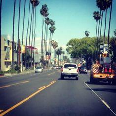 Las palmeras te hacen sentir pequeña en un lugar tan grande.