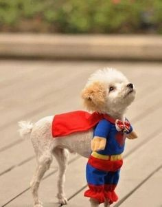 Super dog.  Get me out of this costume please!!