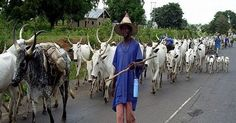 Governor Dave Umahi of Ebonyi State has condemned in entirety the movement of cattle by herdsmen on major roads in the state adding that the government was working on legislation to criminalise the act. Speaking on Saturday at a security meeting to review the activities of the Ebonyi State Committee on Fulani Herdsmen in Abakaliki Umahi said the law when enacted will make it a criminal offence for anybody to move herds of cattle along major roads in any part of the state. The governor was…