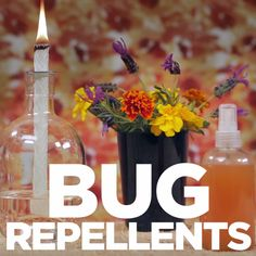 3 DIY Natural Bug Repellants
