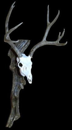 Taxidermy Products