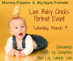 New Event: Pose for a Portrait with Live Baby Chicks at Big Apple Portraits