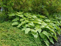 Gifts For The Outdoor Enthusiastics Vintage Gardening, Gardening Books, Gardening Tips, Garden Gadgets, Natures Sunshine, Organic Gardening Magazine, Garden Equipment, Garden Inspiration, Garden Ideas