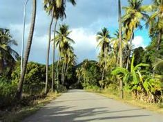 fig tree drive antigua - Bing Images
