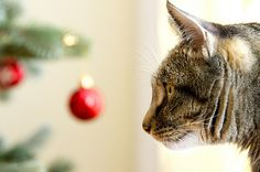 COM for just for the first year and get everything you need to make your mark online — website builder, hosting, email, and more. Cat Wallpaper, Wallpaper Pictures, Christmas Kitten, Make Your Mark, Beautiful Christmas, Cat Art, Kittens, Animals, Cute Kittens