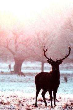 #beautiful #Magnificent #Animals  ::)