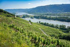 Au coeur du vignoble St Joseph, Côtes du Rhône.