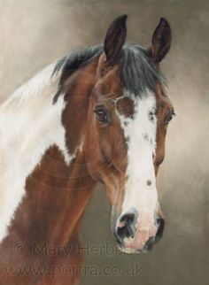 Make one special photo charms for your pets, 100% compatible with your Pandora bracelets. skewbald horse portrait by Mary Herbert