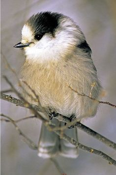Funny bird pictures guys 51 New ideas Birds In The Sky, Small Birds, Little Birds, Pet Birds, Beautiful Birds, Animals Beautiful, Funny Bird Pictures, Birds Of Paradise Plant, Bird Graphic