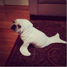 funny pug halloween costumes