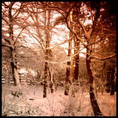 The woods 2012, Bridlington