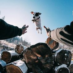 Photo of the Day! Halo the pup might be the only one who's excited to jump into the week! . . . #📸: @hard9choppers #GoPro #GoProPets #🐶 #Woof #instafollow #amazing #tagforlikes #L4L