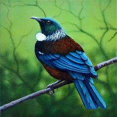 Tui oil painting by Diane nz native birds new zealand blue green original art Tui Bird, Blue Butterfly Wallpaper, Bird Canvas, Nz Art, Nature Artists, Maori Art, Kiwiana, Bird Pictures, Bird Prints