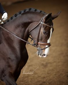 ww.horsealot.com, the equestrian social network for riders & horse lovers | Equestrian Photography : Denise Landerberg.