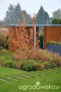 Ogród tworzę nowoczesny czyli wewnętrzna walka jak nie zostać kokoszką :) - strona 2027 - Forum ogrodnicze - Ogrodowisko