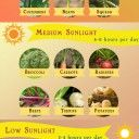 Starting a home garden and planting your own crops might take time getting used to, but the benefits that you can reap for both your body and mind are abundant. Check out this infographic to learn mo...