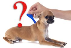 Commercial flea treatments can be deadly for your dog  The more I am reading and studying about commercial flea...