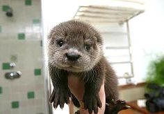 It's official, I want a baby otter