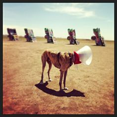 Diesel's first visit to Cadillac Ranch in Texas