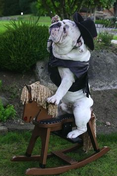 Giddy up! #cowboy #englishbulldog #dogs #pets #animals #best #dog #bulldogs #breed #canine #pooch #cute #bully #funny #costume
