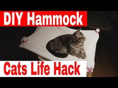 DIY Projects For Cats // Cats Life Hacks