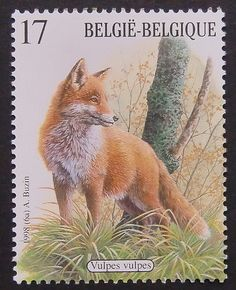 Vulpes vulpes Red Fox Framed Postage Stamp by PassionGiftStampArt