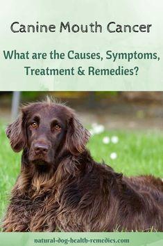 Pin By Dog Lovers Hub On Dog Lovers Hub Dog Cancer Tumors On
