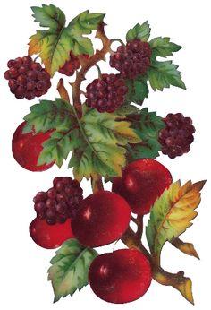 tubes victoriens / fruits
