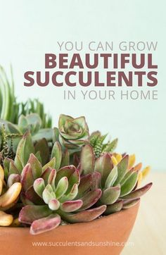 Get the information you need to properly care for succulents indoors