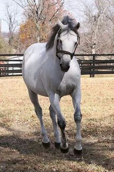 Updated picture of Monarchos about; the fastest horse in the barn, triple crown winner,very good jumper and is very good western horse