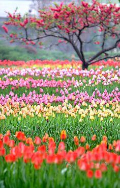 field of flowers  love!