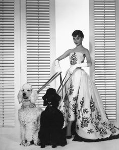 eachdayaflower.tumblr.com 381 × 480 - Audrey Hepburn with poodles in promo photo for