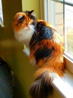 long-haired calico // (4) Одноклассники