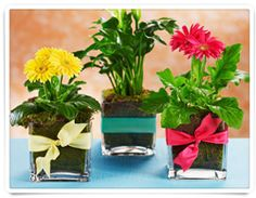 The plants will last longer than a cut flower arrangement.  Pretty sure those are dollar store containers.  Cute!