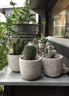 Några små kaktusar (via Bloglovin.com )