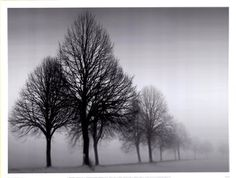 """Ilona Wellmann showcases the title of the moody art print """"Melancholy."""" The black-and-white shot of trees surrounded by rising fog creates a stark, desolate atmosphere. The studio-quality giclee print would make a great gift for a photography student. Framed Art Prints, Fine Art Prints, Winter Pictures, Nature Pictures, Winter Trees, Scripture Art, Tree Art, Mother Nature, Nature Photography"""