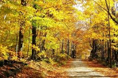 Foliage country road