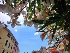 Essence of summer in #Bonassola, #Cinqueterre #Italy  www.caduferra.it